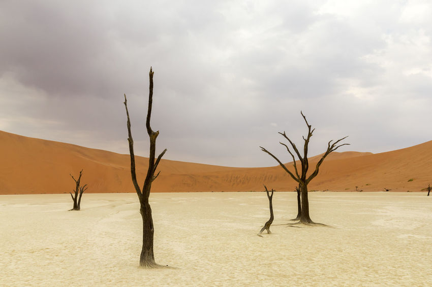 Deadvlei - Namibia Arid Climate Bare Tree Beauty In Nature Cloud Cloud - Sky Cloudy Deadvlei Desert Landscape Landscapes With WhiteWall Namibia Nature Non-urban Scene Panorama Red Remote Sand Scenics Sky Solitude Tree TreePorn Trees Market Bestsellers September 2016 The Great Outdoors With Adobe The Great Outdoors - 2017 EyeEm Awards