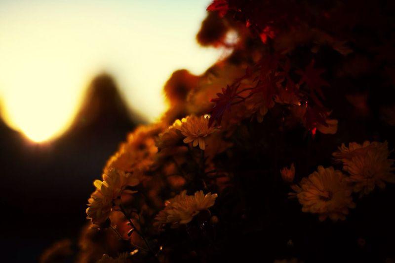 Beautiful Flowers Yellow Sunset