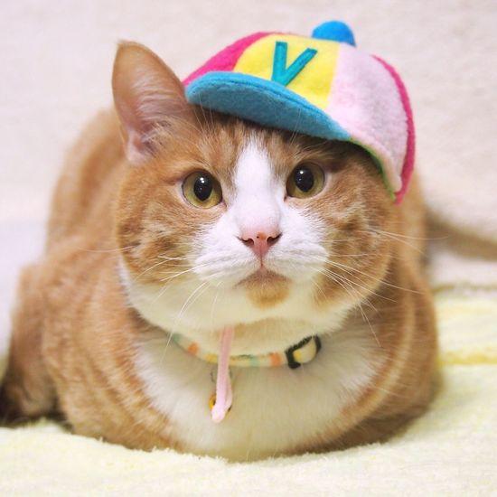 my cat yoneyuki🐈 Cats Of EyeEm Cat Lovers Catoftheday Cat Photography Cat Watching Catsofinstagram Yoneyukithecat