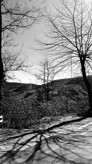#serenity  #emotions #photography #silence #blackandwhite #trees #EyeEmSelects EyeEm Best Shots #EyeEmNewHere #interesting Photographyblackandwhite #EyeEm Nature Lover Nature Beauty In Nature Outdoors Tranquil Scene Tranquility Tree