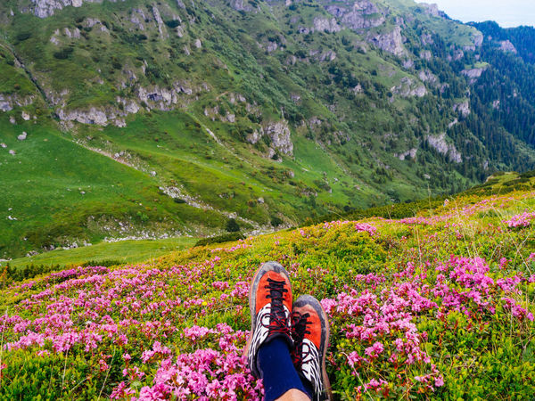 Rhododendron #Adventure #Mountain #hiking #rhododendron #summer #tranquillity #travelphotography #trekking Beauty In Nature Camera - Photographic Equipment Flower Focus On Foreground Hiking Landscape Leisure Activity Mountain Mountain Range Nature One Person Outdoors Photography Themes Real People Selfie Standing