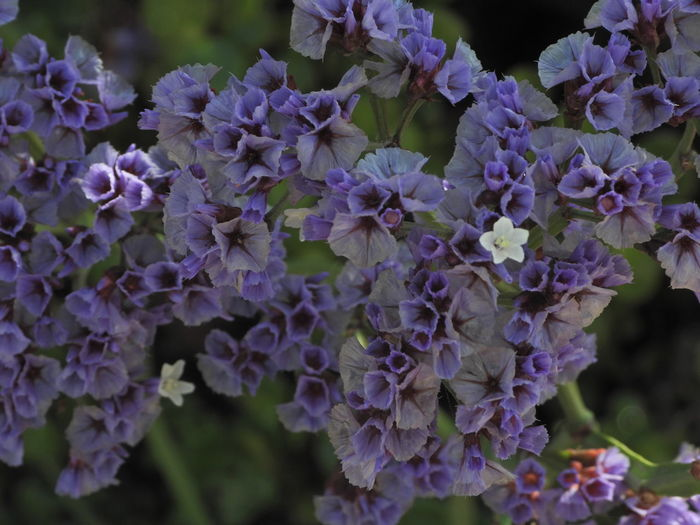 Close-up of purple flowering plants