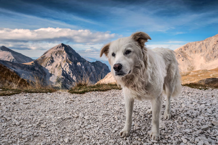 Portrait of a dog on mountain against sky