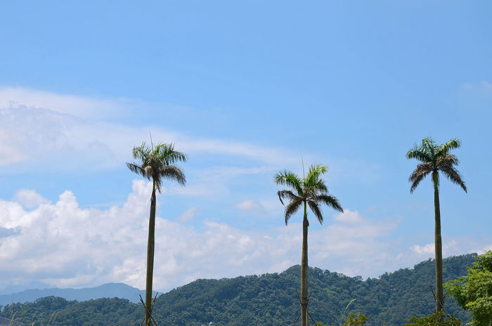 Beauty In Nature Blue Day Growth Nature No People Outdoors Palm Tree Scenics Sky Tranquility Tree Tree Trunk