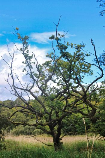 Tree Branch Rural Scene Blue Agriculture Sky Plant Cloud - Sky Growing Countryside Young Plant Growth In Bloom Single Tree Plant Life Blooming