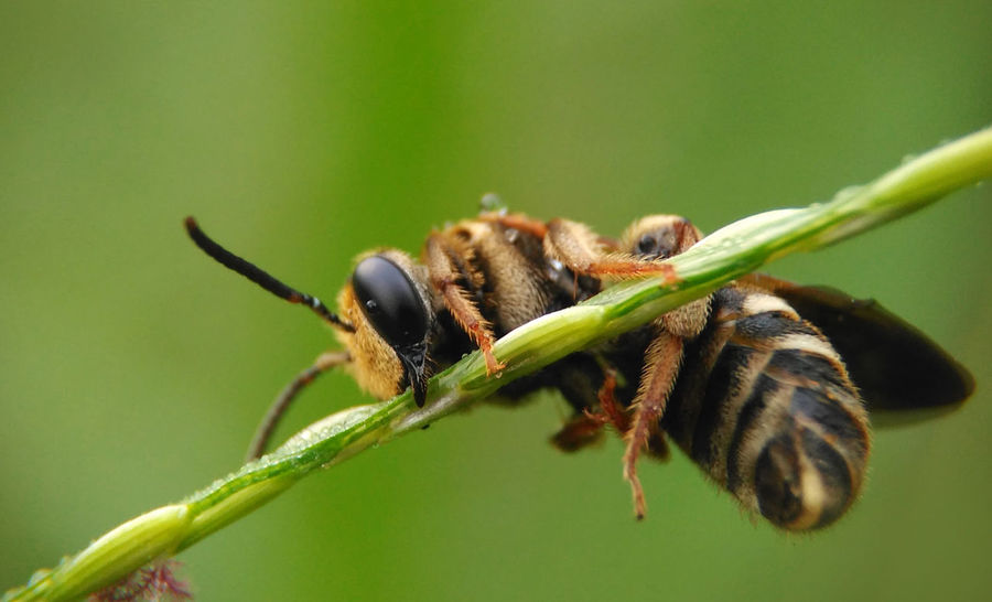 Lazy Bee Animals In The Wild Hug Hugging A Tree Nature Animal Animal Photography Animal Story Animal Themes Animal Wildlife Animals In The Wild Bee Close-up Day Green Color Insect Lazy Lazy Day Leaf Little Bee Little Insect Macro Nature No People One Animal Outdoors
