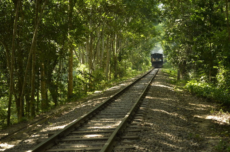 Tree Rail