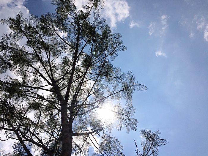 Close-up Day Sky Tree Nature Scenics Low Angle View Tree Nature Cloud - Sky No People Outdoors Growth Tranquility Beauty In Nature Branch Sun