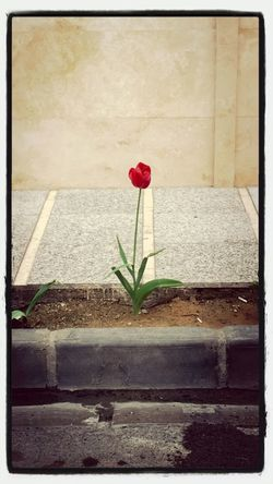 Flower Alone...