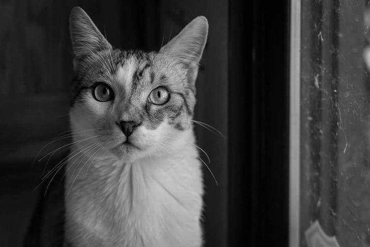 Cats Cat♡ Cat Lovers Kitten Kitty Kittycat Kitty!  Catoftheday Cat Watching Clearlake