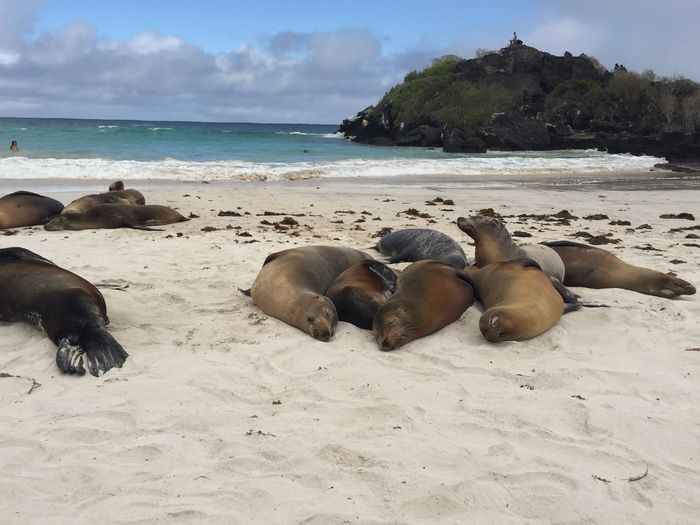Paradise Galapagos - Ecuador Island Beach Land Sea Water Sand Sky Beauty In Nature