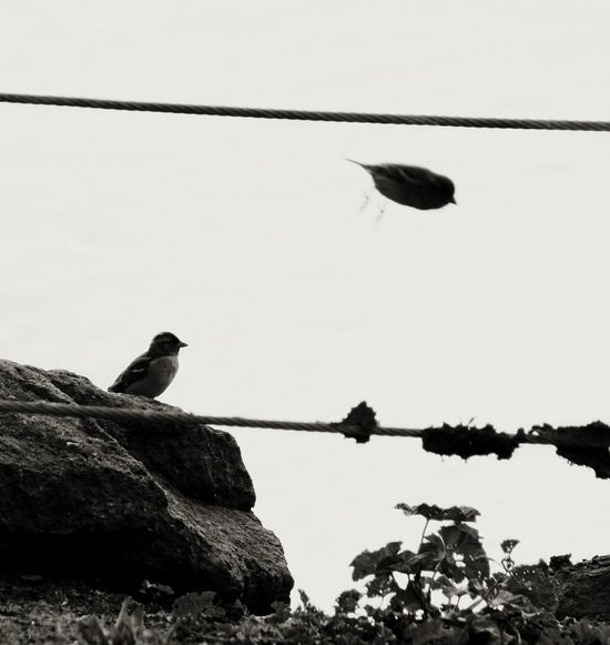One bird left behind... Nature On Your Doorstep EyeEm Best Shots Eye4photography  Birds Black And White Black And White Collection  Landscape Bird Photography Silhouette EyeEm Nature Lover