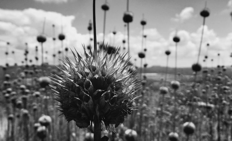 blanco y negro EyeEm Selects Flower Focus On Foreground Nature Day Plant Fragility No People Growth