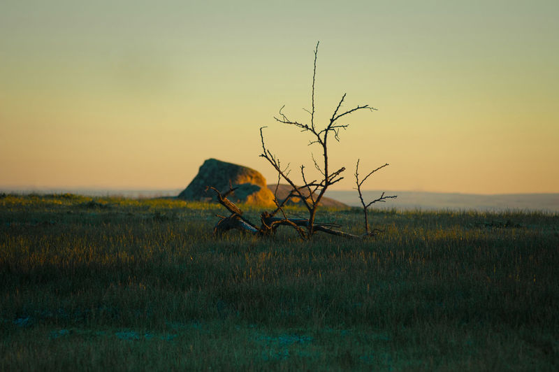Driftwood On Grassy Land By Lake Against Sky During Sunset