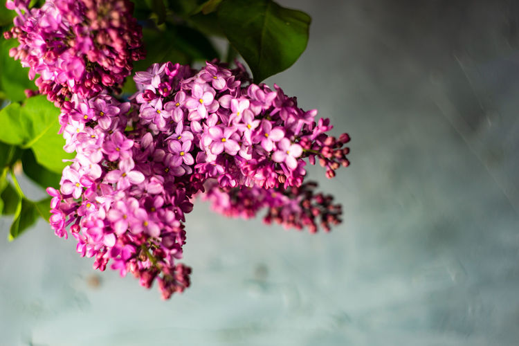 Flowering Plant Flower Plant Beauty In Nature Vulnerability  Fragility Freshness Growth Nature Close-up Petal Pink Color Purple Day Focus On Foreground Lilac Flower Head Inflorescence No People Outdoors Bunch Of Flowers Lantana
