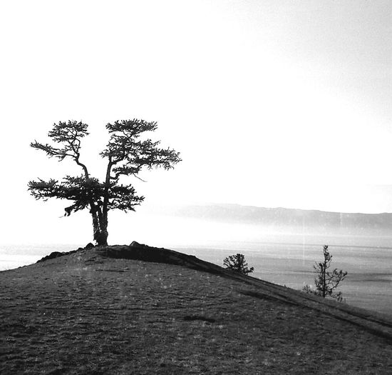 Olhon Lake Baikal Trees Melancholic Landscapes