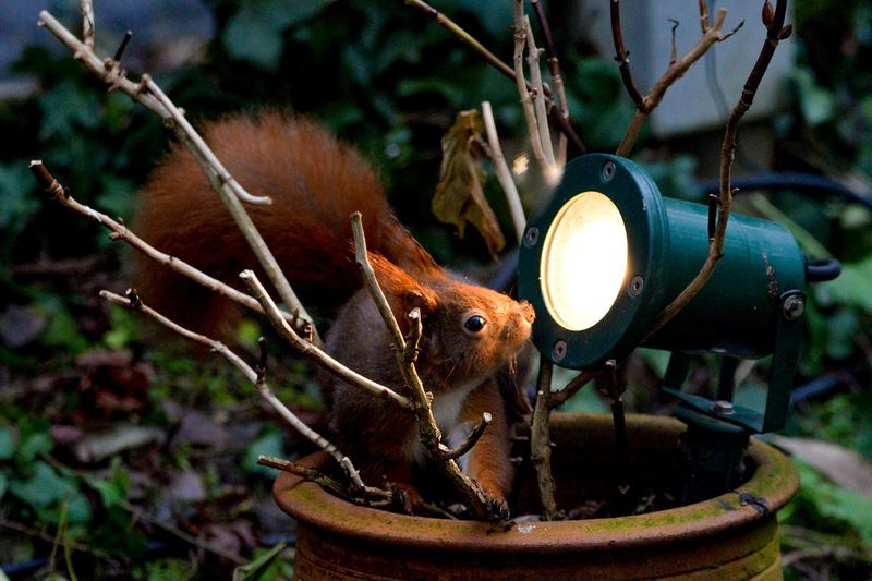 In the spotlight Squirrel Animal Wildlife One Animal Animals In The Wild Animal Themes No People Mammal Tree Outdoors Nature