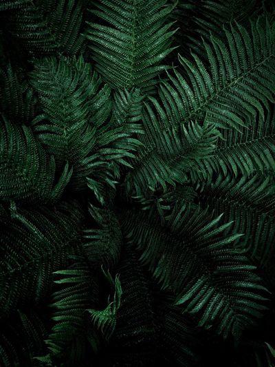 Full frame shot of fern leaves against black background