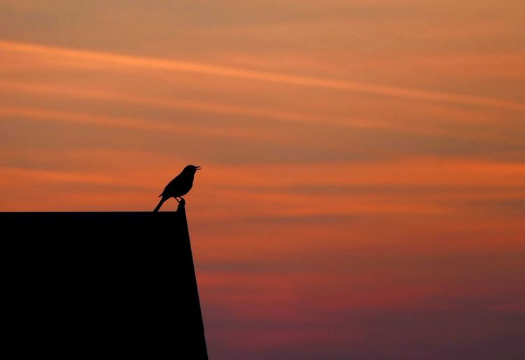 Silhouette bird perching on roof against cloudy sky during sunset