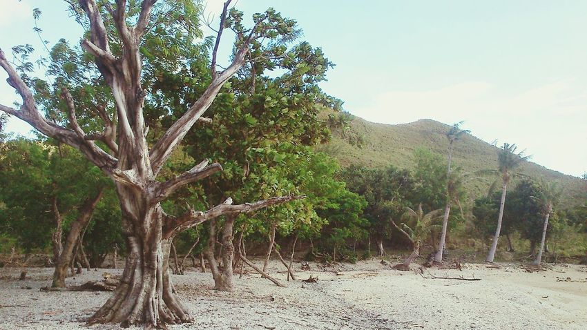 Islandlife Life And Death Trees Nature Vintage Style Beach Wilderness Philippines Global Warming Leisure Activity Lost In Paradise Break The Mold TCPM
