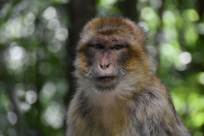 Monkey Sommer Day Outdoors Affe Close-up Looking At Camera Animal Wildlife One Animal Animals In The Wild Animal Themes Focus On Foreground Primate Mammal No People Nature Portrait Japanese Macaque