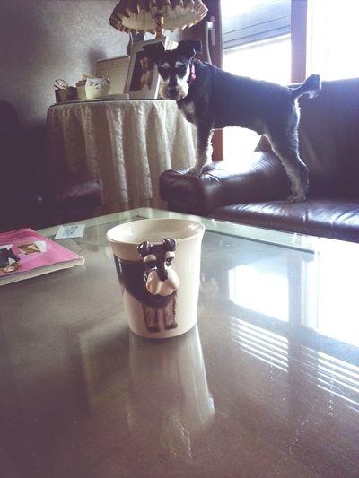 Skip Baby On The Mug<3