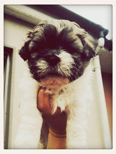 Miller ? My Little Cutie Pie ? Love Him So Much x MillerMySnugglieBear