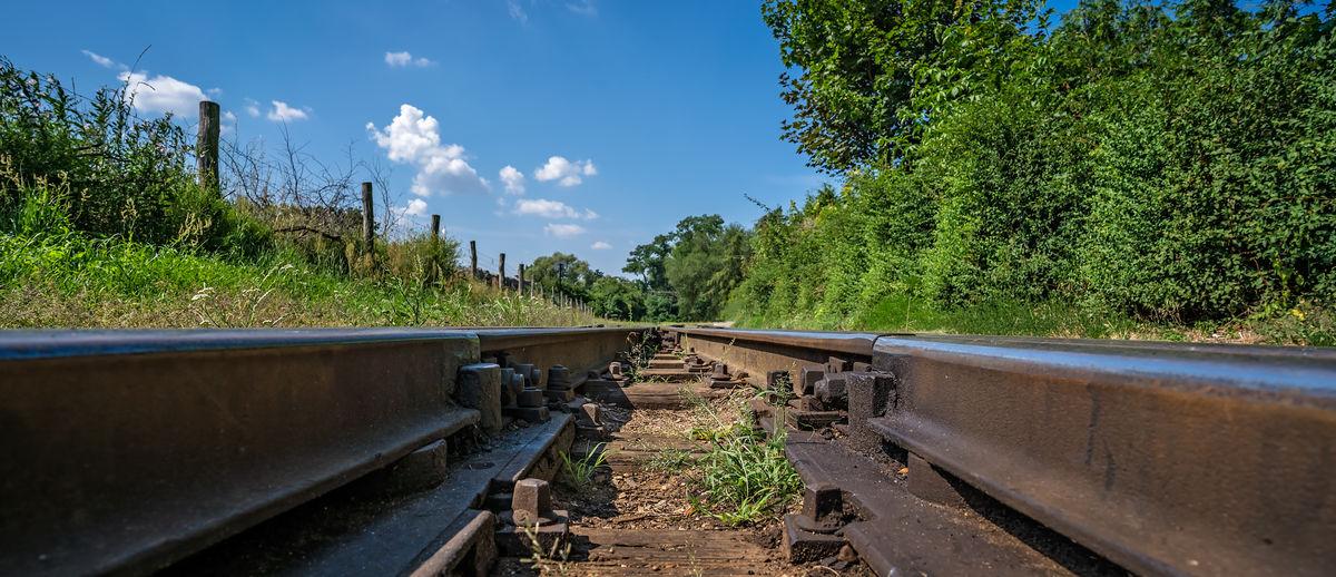 Railroad tracks amidst plants against sky