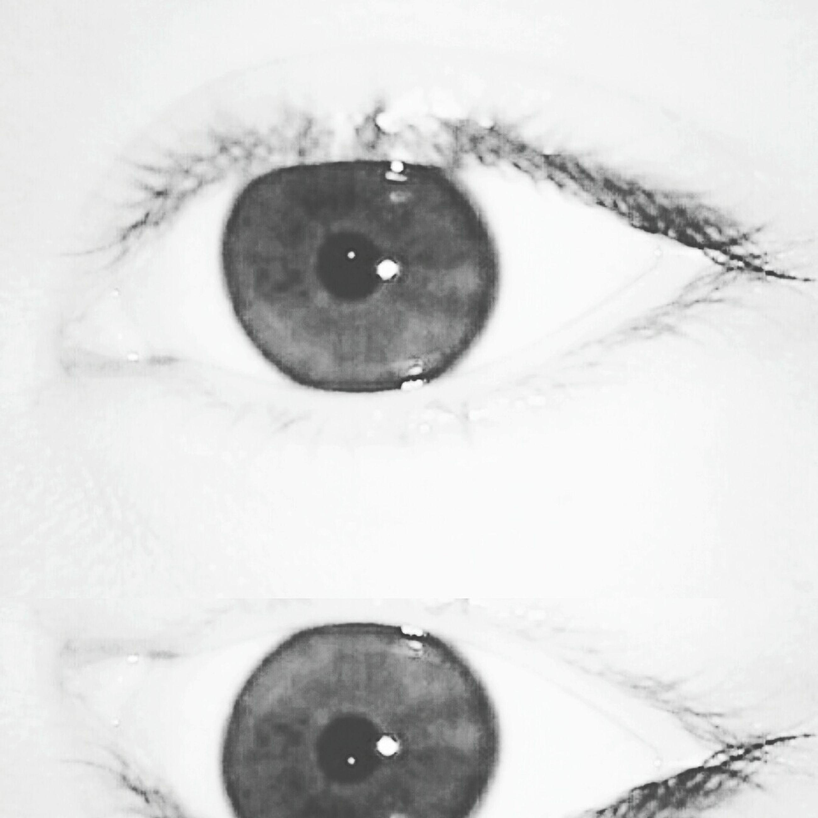 human eye, close-up, part of, eyelash, lifestyles, eyesight, headshot, looking at camera, human face, sensory perception, portrait, indoors, cropped, human skin, studio shot, leisure activity, iris - eye
