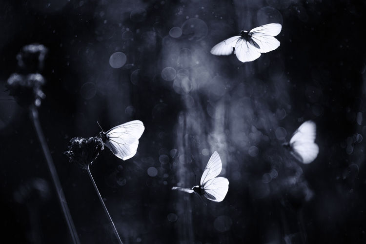 Close-up of butterflies flying over flowers
