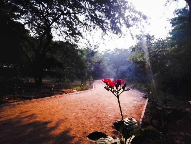 Parks Here Belongs To Me Nature My City Yudhvir New Delhi, NCR The Week On EyeEm