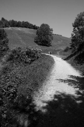 Debating The Path Plant Tree Sky Tranquility Nature Direction Landscape Road Environment Tranquil Scene Beauty In Nature Land Growth The Way Forward Scenics - Nature Dirt Road Day Trail Blackandwhite Black And White