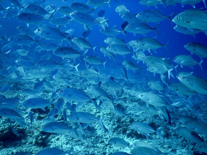 Water Blue Full Frame Backgrounds Nature Sea No People Underwater UnderSea Beauty In Nature School Of Fish Animals In The Wild Pattern Swimming Transparent Outdoors Sea Life Fish Marine