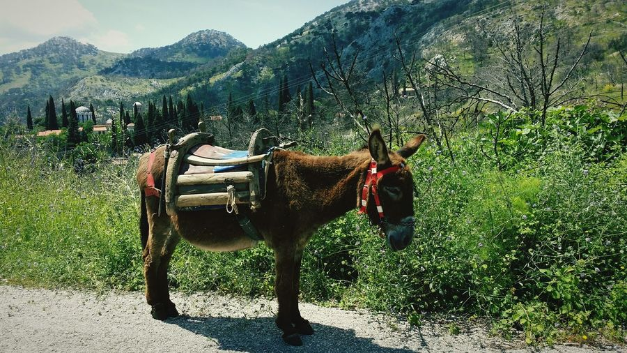 Side View Of Donkey Standing On Street Against Mountains