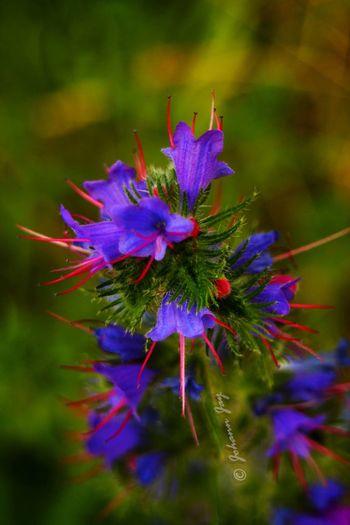 La Petite Ceinture Nature_collection Paris, France  Fleurs Macro_collection Macro_flower Macro Nature Macro Nature