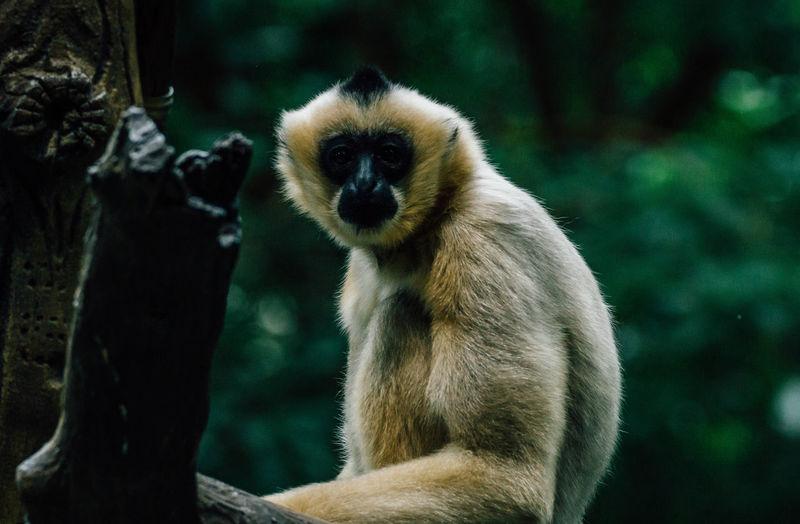 Close-up portrait of monkey sitting on tree