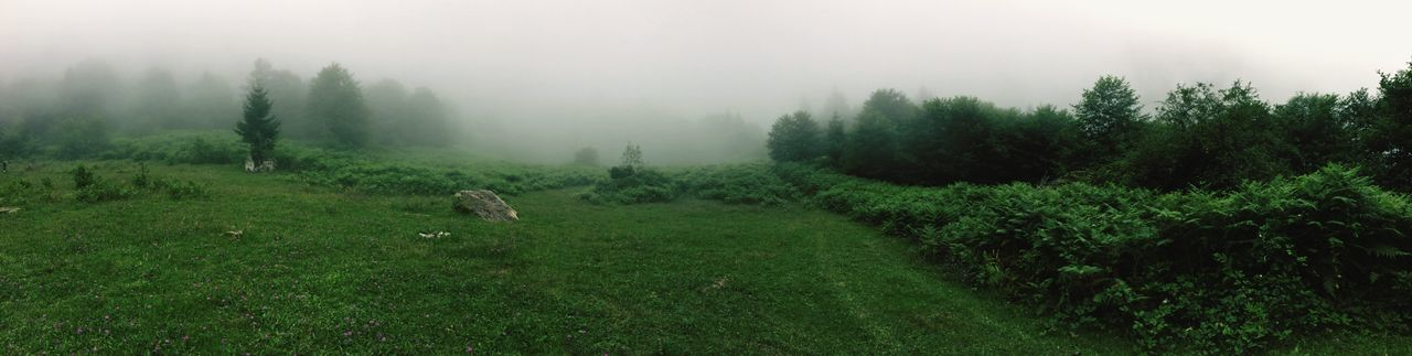 What a view Green Taking Photos Outdoors Check This Out Beauty In Nature Nature EyeEm Selects Landscape Naturelovers Foggy Nature Fog Grass Green Color View EyeEmNewHere