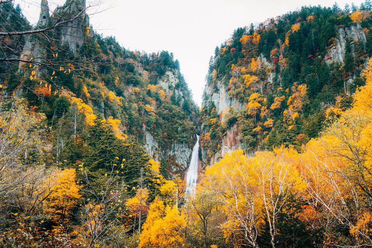 Daisetsuzan Tree Plant Beauty In Nature Autumn Change Scenics - Nature Forest Nature Tranquility No People Land Orange Color Growth Tranquil Scene Day Sky Non-urban Scene Outdoors Environment Mountain Autumn Collection Fall Flowing Water