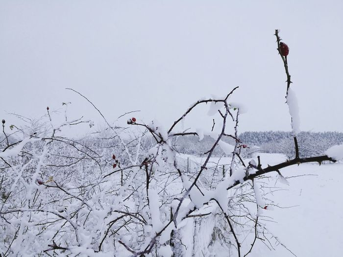 Bird Cold