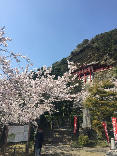 Tree Growth Sky Nature Architecture Flower Cherry Blossom