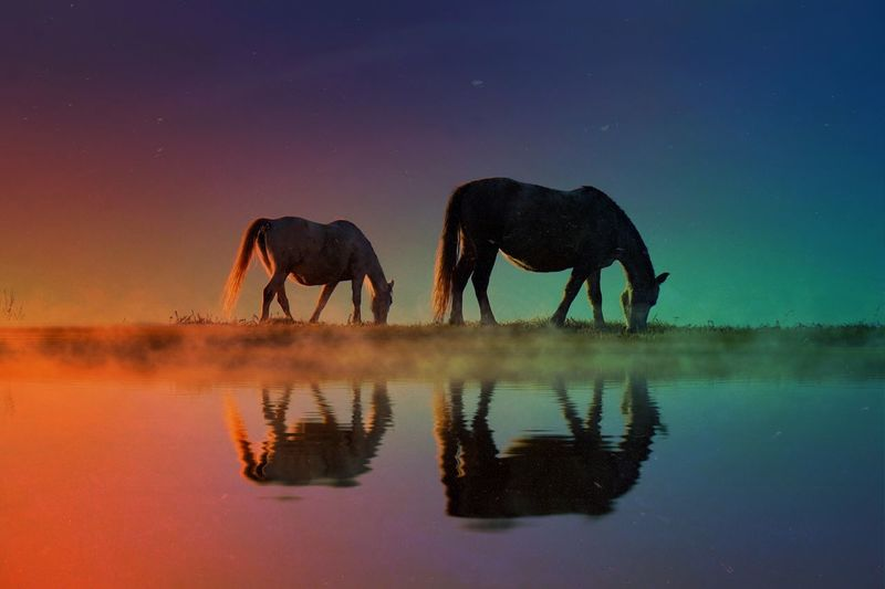 Miles Away Sky Nature Reflection Animal Themes Beauty In Nature Scenics No People Tranquil Scene Mammal Outdoors Idyllic Full Length Tranquility Sunset Domestic Animals Water Animals In The Wild Elephant African Elephant Day Landscape Colors Horse Light And Shadow