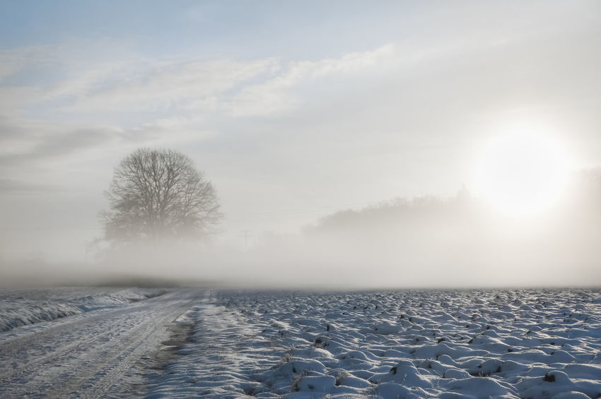 Dreamy winter landscape with a snowy country road and field covered by a cold fog, at sunrise, on a February morning, near Schwabisch Hall, Germany. Misty Cold Season Cold Temperature Fog Frozen Germany Nature No People Non-urban Scene Scenics - Nature Snow Sunrise Tranquil Scene Tranquility Tree White Color Winter