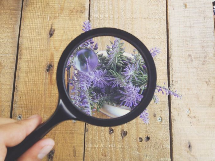 Cropped image of person holding magnifying glass over purple flowers on table