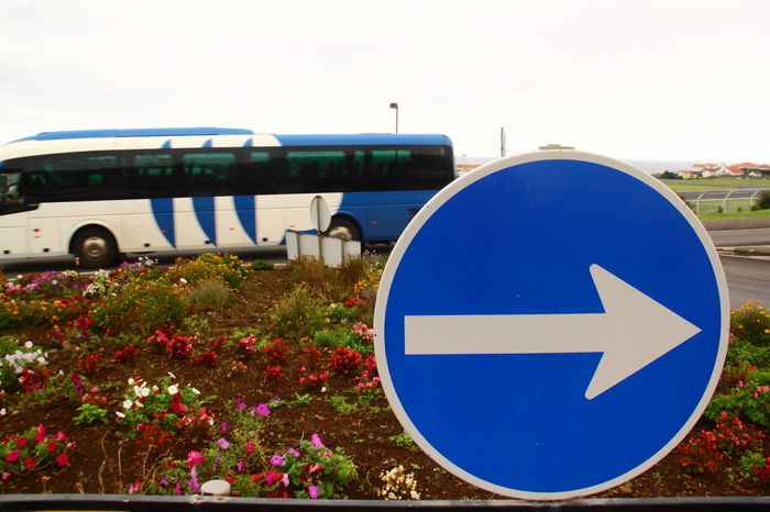 The Blue Bus (Wrong Way!) Arrow Sign Blue Bus Clear Sky Communication Contrasting Colors Day Flower Flowerbeds Freshness Growth Journey Mode Of Transport Nature Opposite Directions Outdoors Plant Road Road Sign Roundabout Sign Transportation Travel
