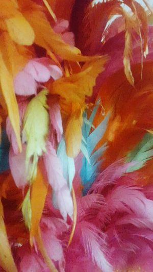 Feathers Multi Colored Abstract Backgrounds