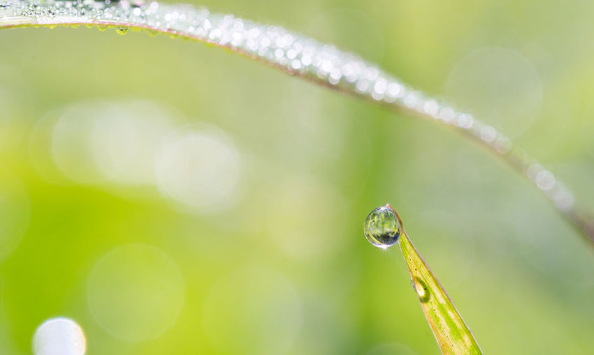 Close-up of dew drops on plant