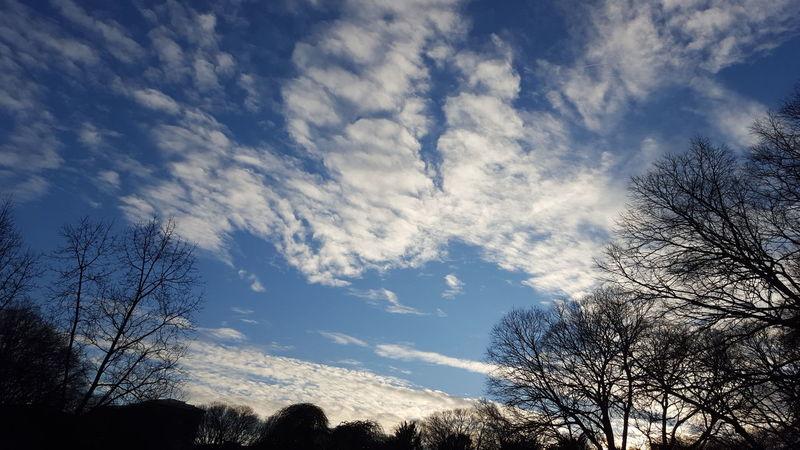 Cielo E Nuvole Dalla Finestra Silhouette Silouhette&sky Showcase: February From My Window Samsung Galaxy S6 Samsungphotography Winter Bare Tree Winter Light No Edit/no Filter Smartphonephotography