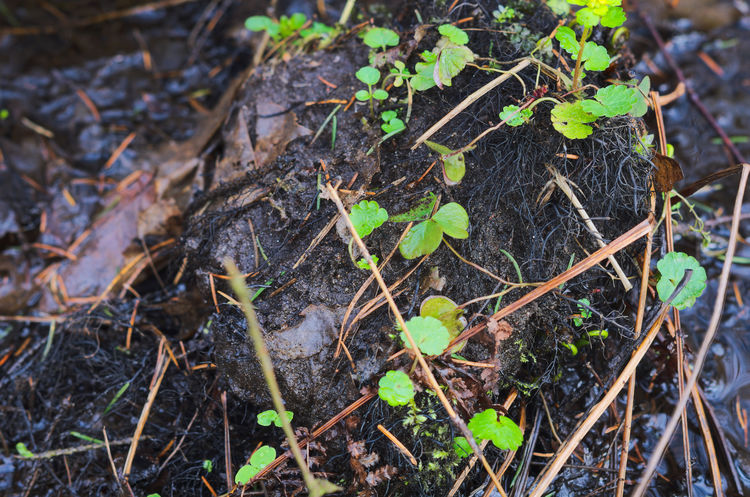 Green plants on the black soil Black Soil Close-up Growth Nature No People Outdoors Plant River Riverside