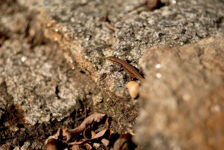 Lizard Rocks Sandun Pond France Wild