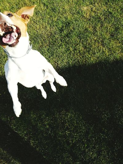 Dog Pets One Animal Crazydog Domestic Animals Nature Outdoors Live For The Story Eye Em Nature Lover Eyemanimallover Day